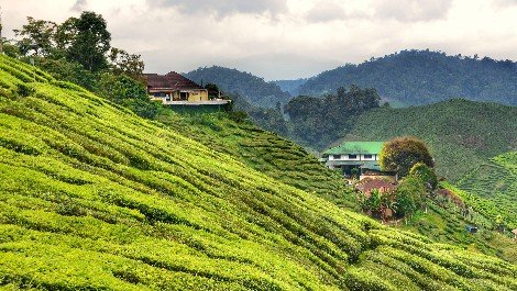 Tanah Rata is the access point to the Cameron Highlands